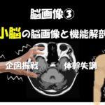 10.19(土)小脳障害の脳画像と治療のための機能解剖~企図振戦・体幹失調の脳画像と治療展開~@広島