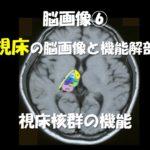 3.14(土)視床障害の脳画像と治療のための機能解剖~感覚評価だけでない、視床出血専門の評価と治療展開~@名古屋