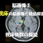 3.28(土)視床障害の脳画像と治療のための機能解剖~感覚評価だけでない、視床出血専門の評価と治療展開~@広島