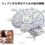 2019.8.17(土)神戸支部1日:運動が起こるまでの脳内機構